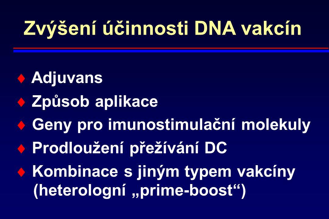 Zvýšení účinnosti DNA vakcín  Adjuvans  Způsob aplikace  Geny pro imunostimulační molekuly  Prodloužení přežívání DC  Kombinace s jiným typem vak