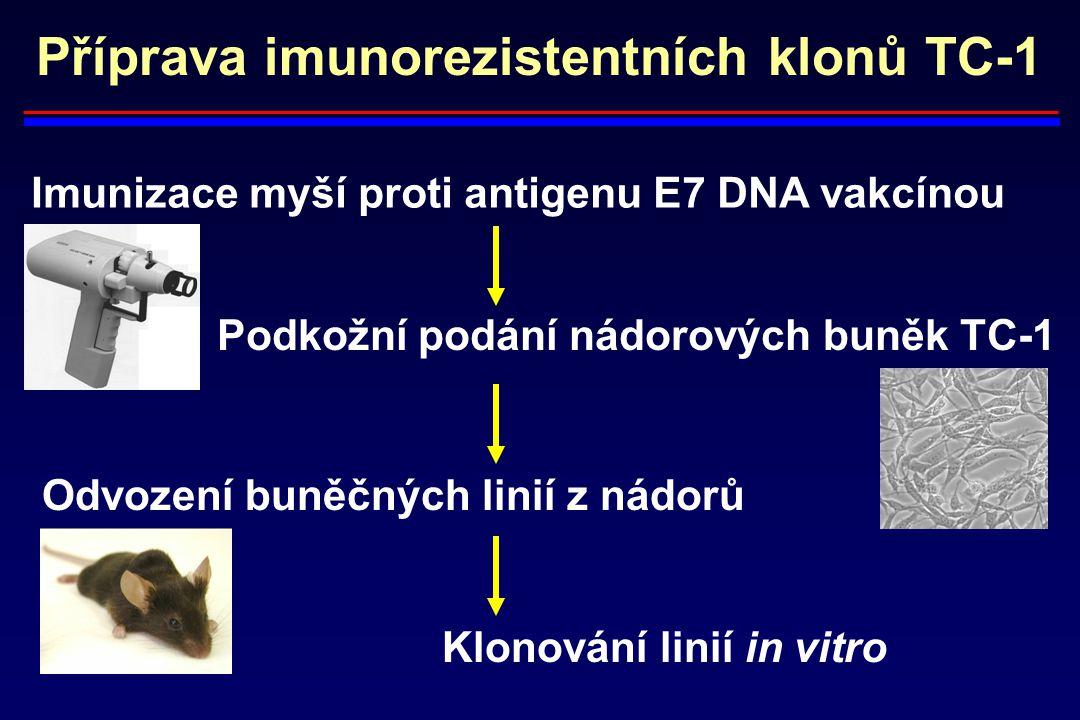 Příprava imunorezistentních klonů TC-1 Imunizace myší proti antigenu E7 DNA vakcínou Podkožní podání nádorových buněk TC-1 Odvození buněčných linií z