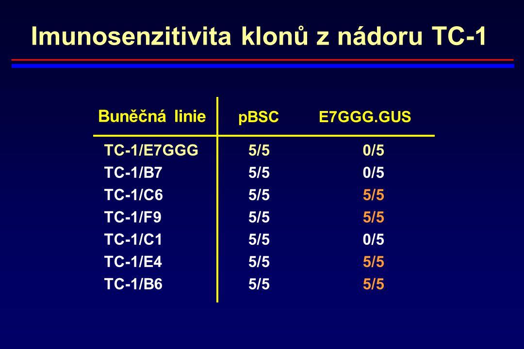 Imunosenzitivita klonů z nádoru TC-1 TC-1/E7GGG 5/5 0/5 TC-1/B7 5/5 0/5 TC-1/C6 5/5 5/5 TC-1/F9 5/5 5/5 TC-1/C1 5/5 0/5 TC-1/E4 5/5 5/5 TC-1/B6 5/5 5/