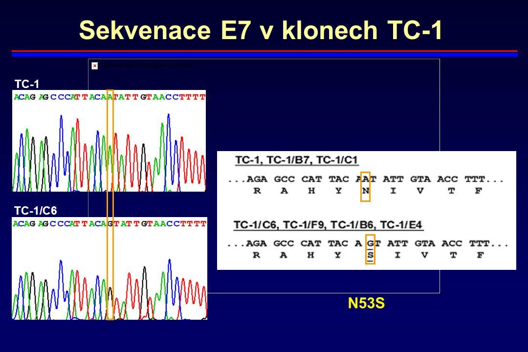 Sekvenace E7 v klonech TC-1 TC-1 TC-1/C6 N53S