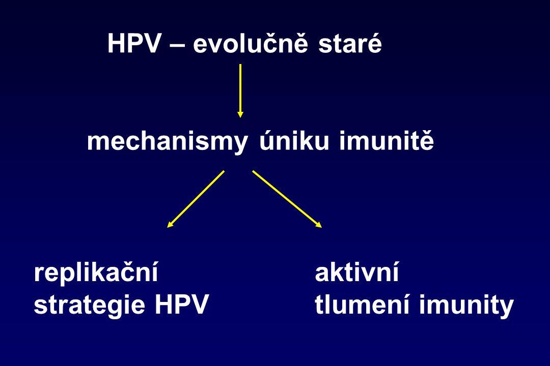 Replikační strategie HPV  infekce bazálních keratinocytů, ne APC  nelyzují hostitelské buňky  bez viremie (nedostávají se do krve)  časné antigeny hlavně jádře  produkce pozdních antigenů minimalizována  vyvolání tolerance expozicí antigenů v nezánětlivém prostředí