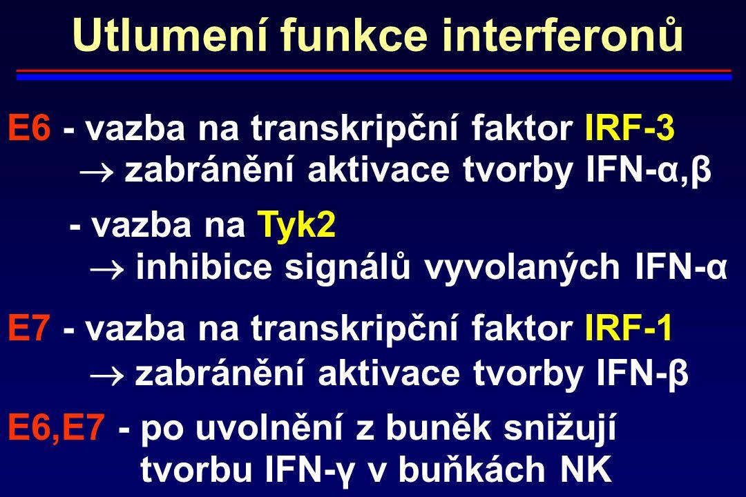 Utlumení funkce interferonů E6 - vazba na transkripční faktor IRF-3  zabránění aktivace tvorby IFN-α,β - vazba na Tyk2  inhibice signálů vyvolaných