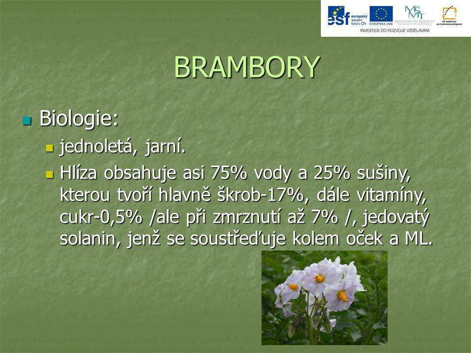 Biologie: Biologie: jednoletá, jarní. jednoletá, jarní. Hlíza obsahuje asi 75% vody a 25% sušiny, kterou tvoří hlavně škrob-17%, dále vitamíny, cukr-0