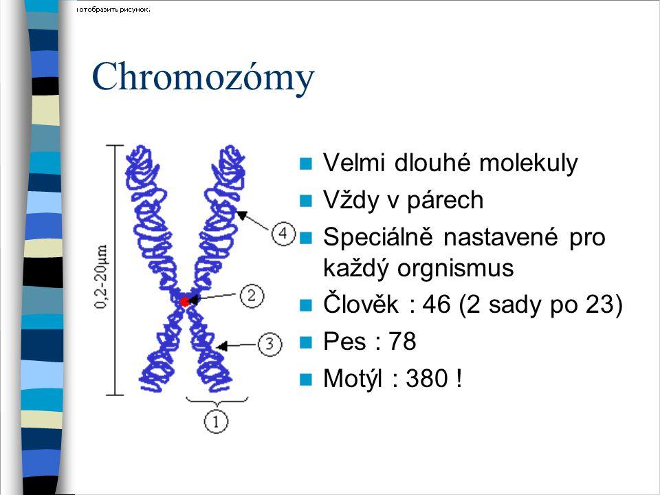 Geny Neviditelné Umístěny na chromozómech Jsou to kódy určující rysy Někdy některé geny jen pro jeden rys
