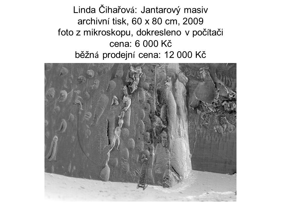 Linda Čihařov á : Jantarový masiv archivn í tisk, 60 x 80 cm, 2009 foto z mikroskopu, dokresleno v poč í tači cena: 6 000 Kč běžn á prodejn í cena: 12 000 Kč