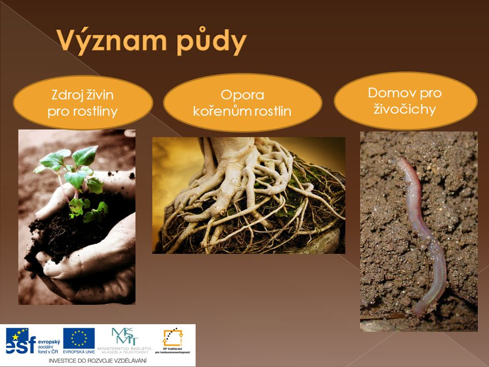 Zdroj živin pro rostliny Domov pro živočichy Opora kořenům rostlin