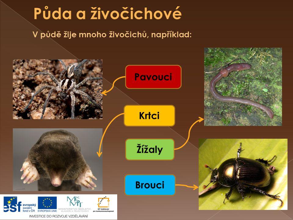 Pavouci Brouci Žížaly Krtci V půdě žije mnoho živočichů, například: