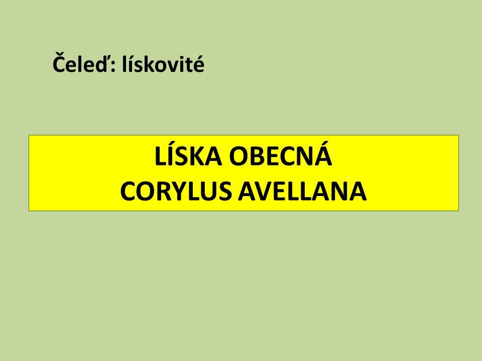 LÍSKA OBECNÁ CORYLUS AVELLANA Čeleď: lískovité
