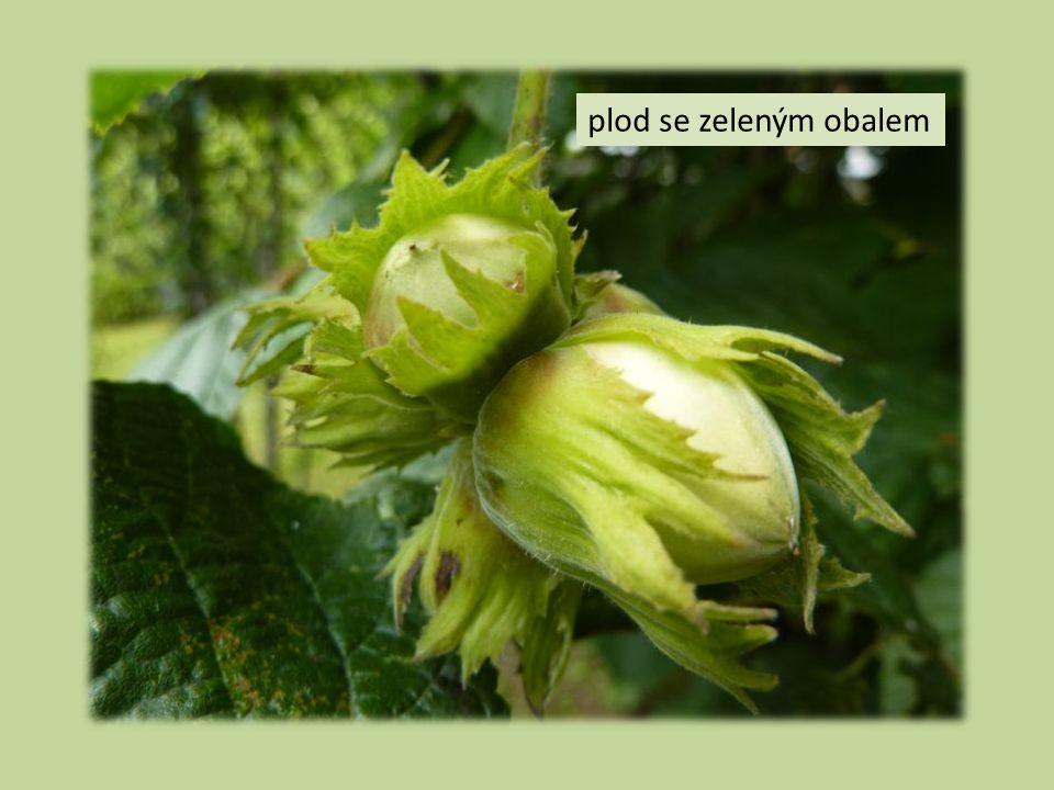 plod se zeleným obalem