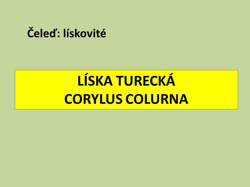 LÍSKA TURECKÁ CORYLUS COLURNA Čeleď: lískovité