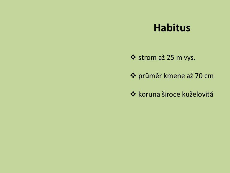 Habitus  strom až 25 m vys.  průměr kmene až 70 cm  koruna široce kuželovitá