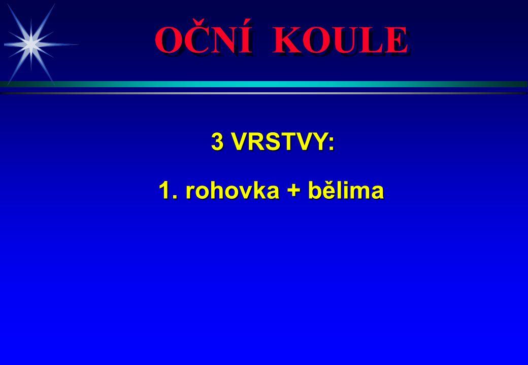OČNÍ KOULE 3 VRSTVY: 3 VRSTVY: 1. rohovka + bělima 1. rohovka + bělima