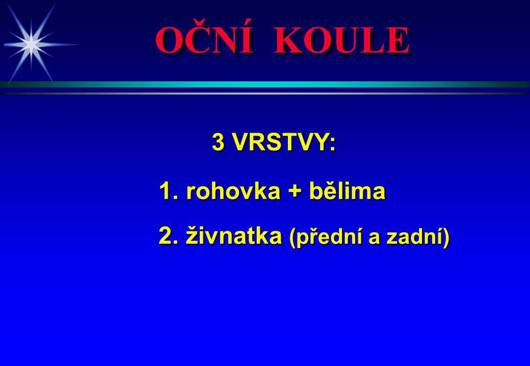 OČNÍ KOULE 3 VRSTVY: 3 VRSTVY: 1. rohovka + bělima 1. rohovka + bělima 2. živnatka (přední a zadní) 2. živnatka (přední a zadní)