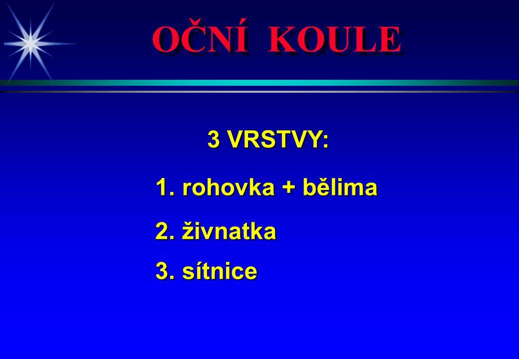 OČNÍ KOULE 3 VRSTVY: 3 VRSTVY: 1. rohovka + bělima 1. rohovka + bělima 2. živnatka 2. živnatka 3. sítnice 3. sítnice
