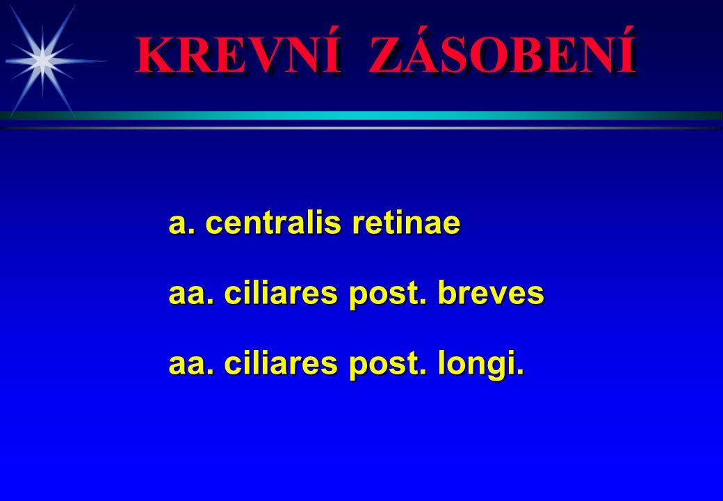 KREVNÍ ZÁSOBENÍ a. centralis retinae aa. ciliares post. breves aa. ciliares post. longi.