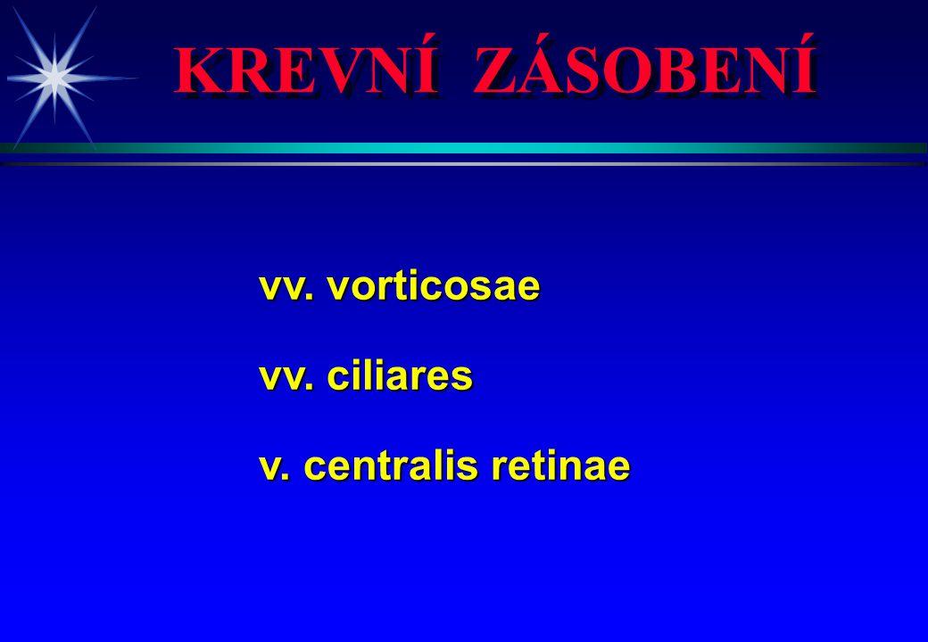 KREVNÍ ZÁSOBENÍ vv. vorticosae vv. ciliares v. centralis retinae