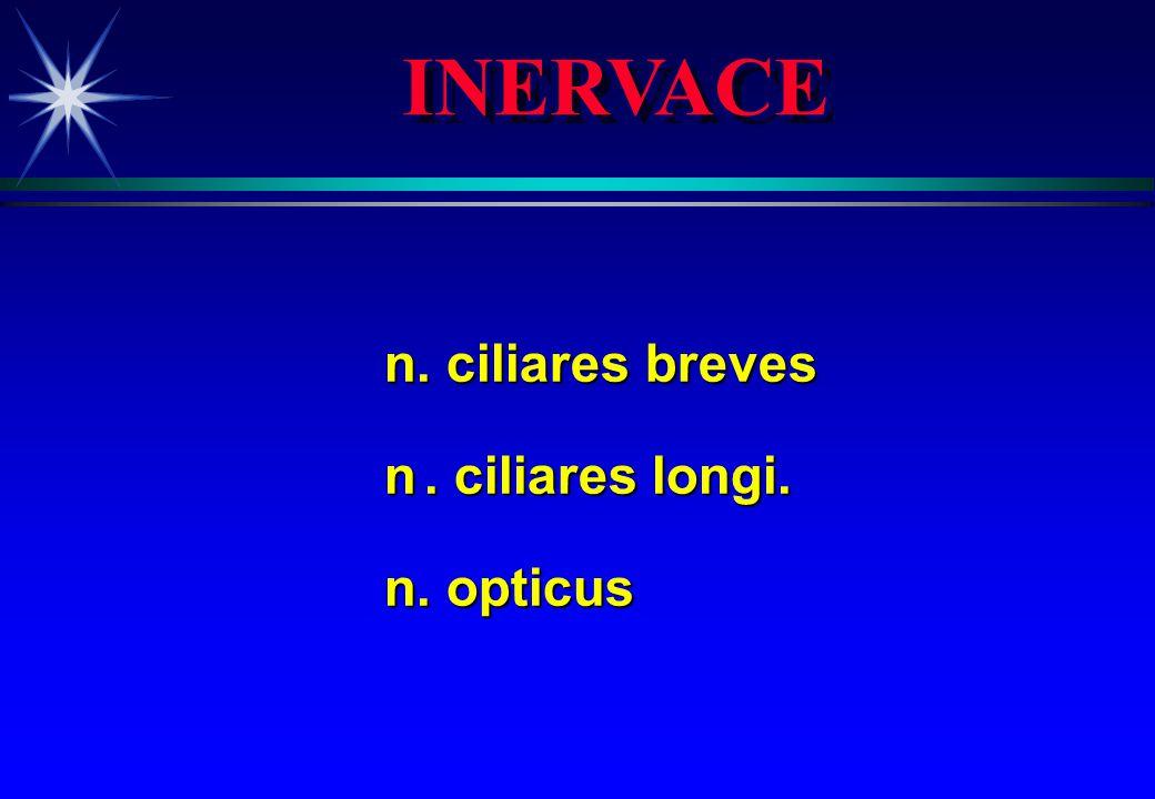 INERVACE n. ciliares breves n. ciliares longi. n. opticus