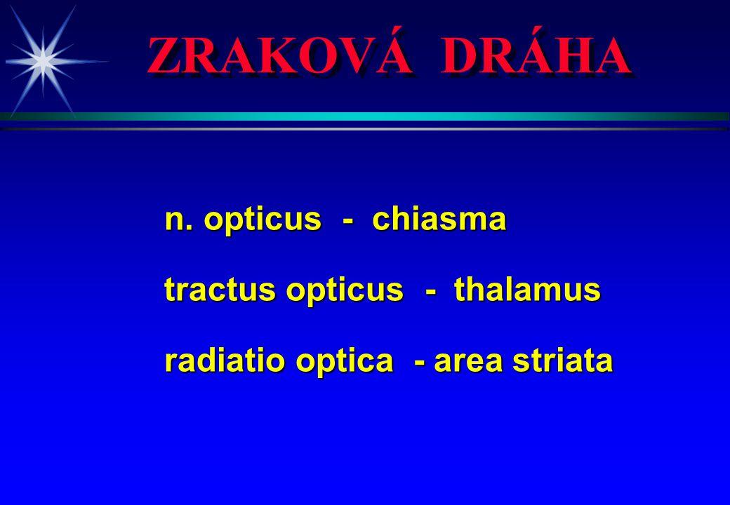 ZRAKOVÁ DRÁHA n. opticus - chiasma tractus opticus - thalamus radiatio optica - area striata