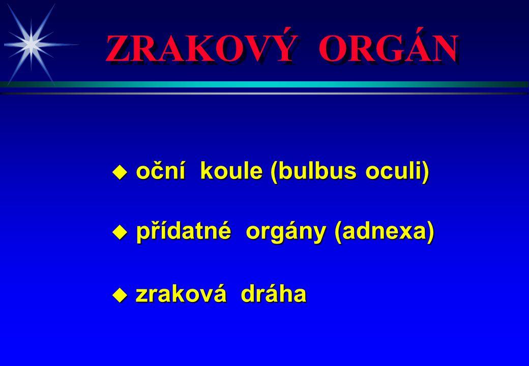 ZRAKOVÝ ORGÁN u oční koule (bulbus oculi) u přídatné orgány (adnexa) u zraková dráha