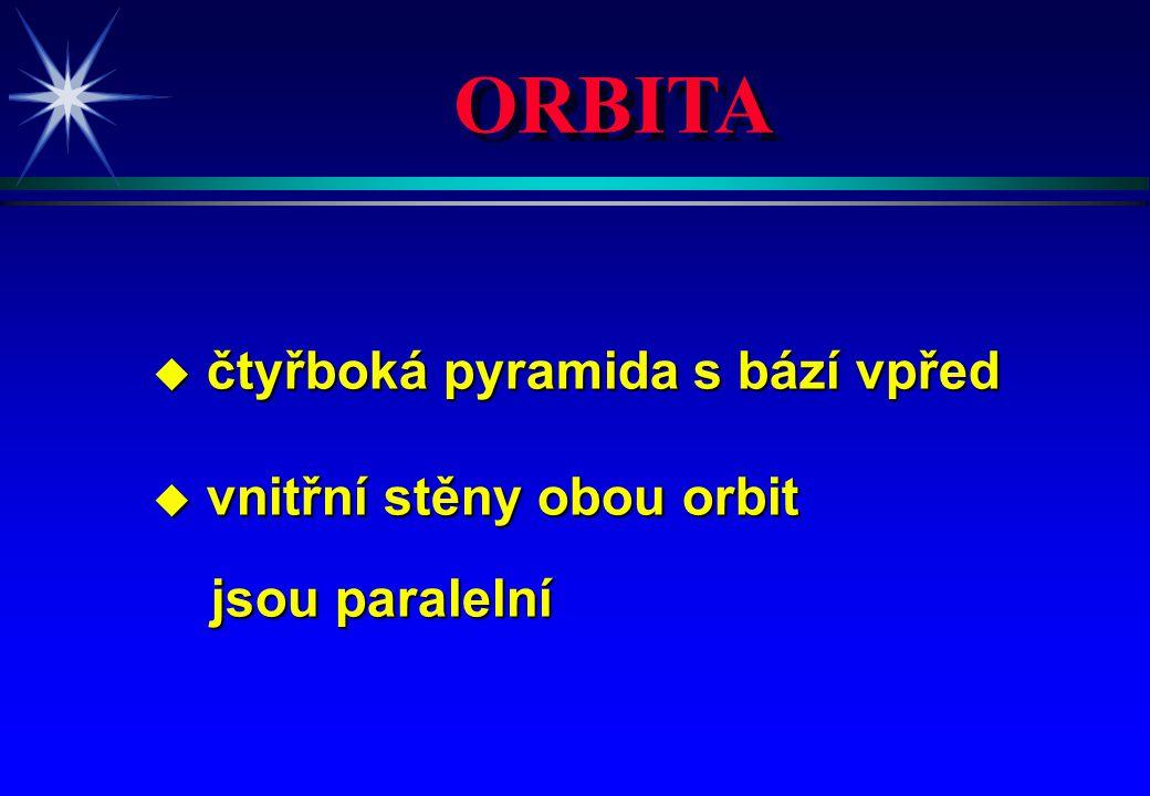 ORBITA u čtyřboká pyramida s bází vpřed u vnitřní stěny obou orbit jsou paralelní jsou paralelní