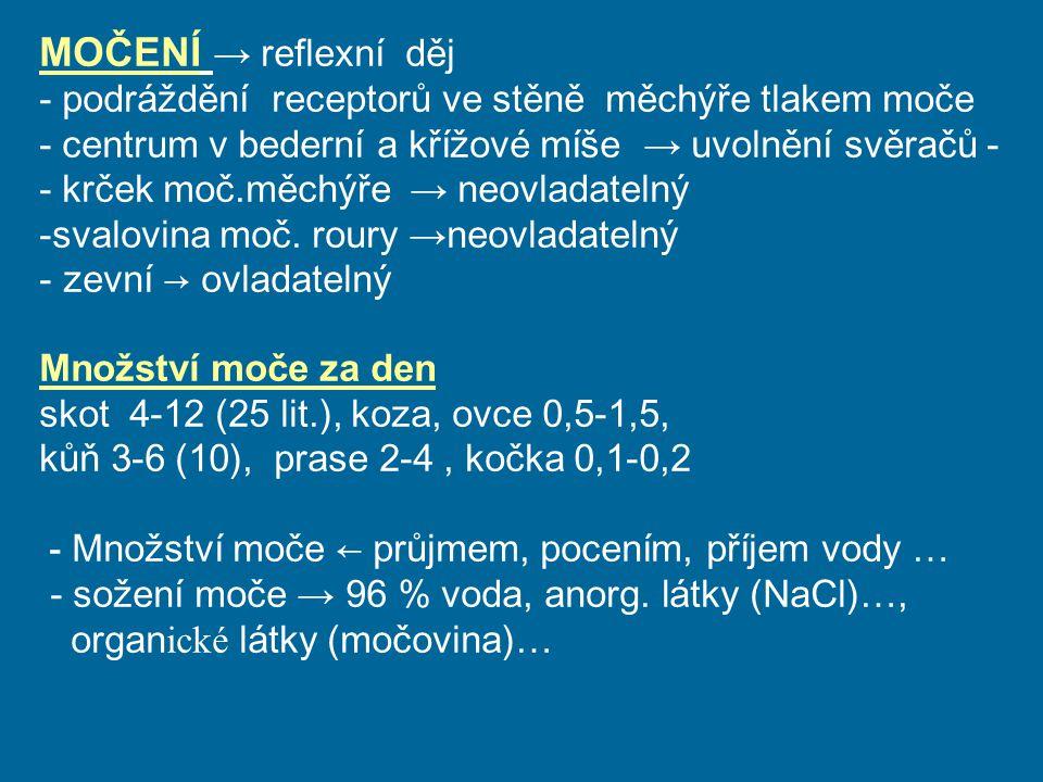 MOČENÍ → reflexní děj - podráždění receptorů ve stěně měchýře tlakem moče - c entrum v bederní a křížové míše → uvolnění svěračů - - krček moč.měchýře