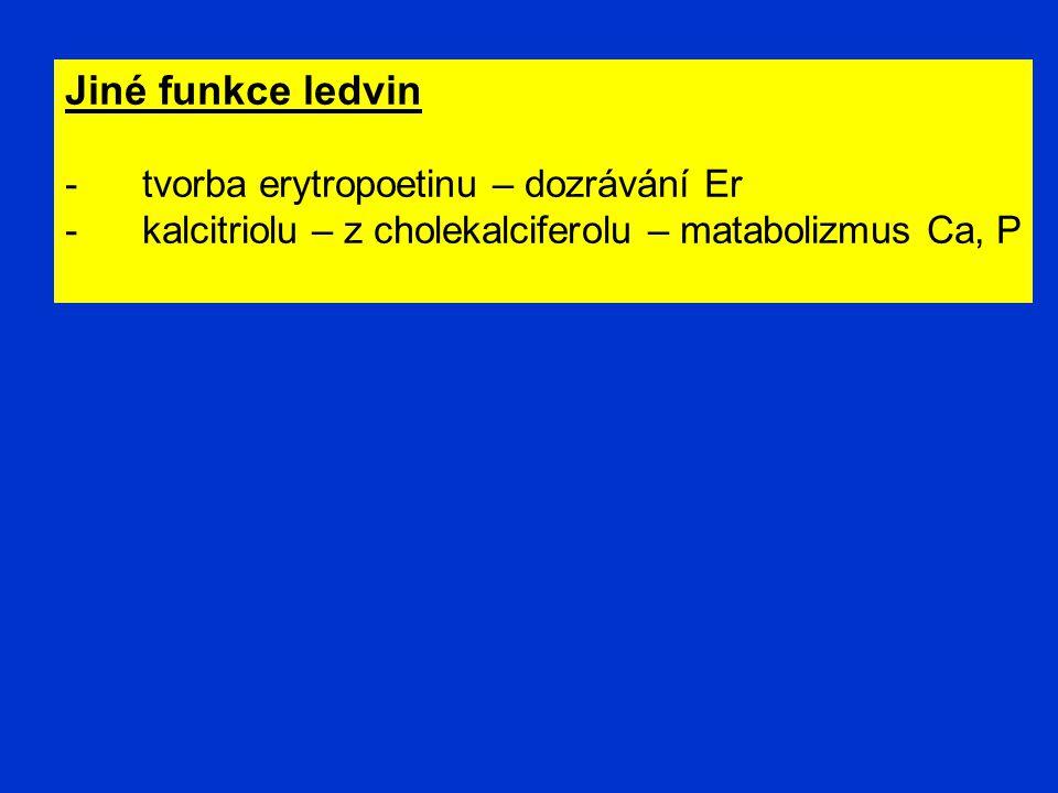 Jiné funkce ledvin - tvorba erytropoetinu – dozrávání Er - kalcitriolu – z cholekalciferolu – matabolizmus Ca, P