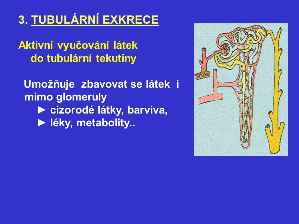 3. TUBULÁRNÍ EXKRECE Aktivní vyučování látek do tubulární tekutiny Umožňuje zbavovat se látek i mimo glomeruly ► cizorodé látky, barviva, ► léky, meta