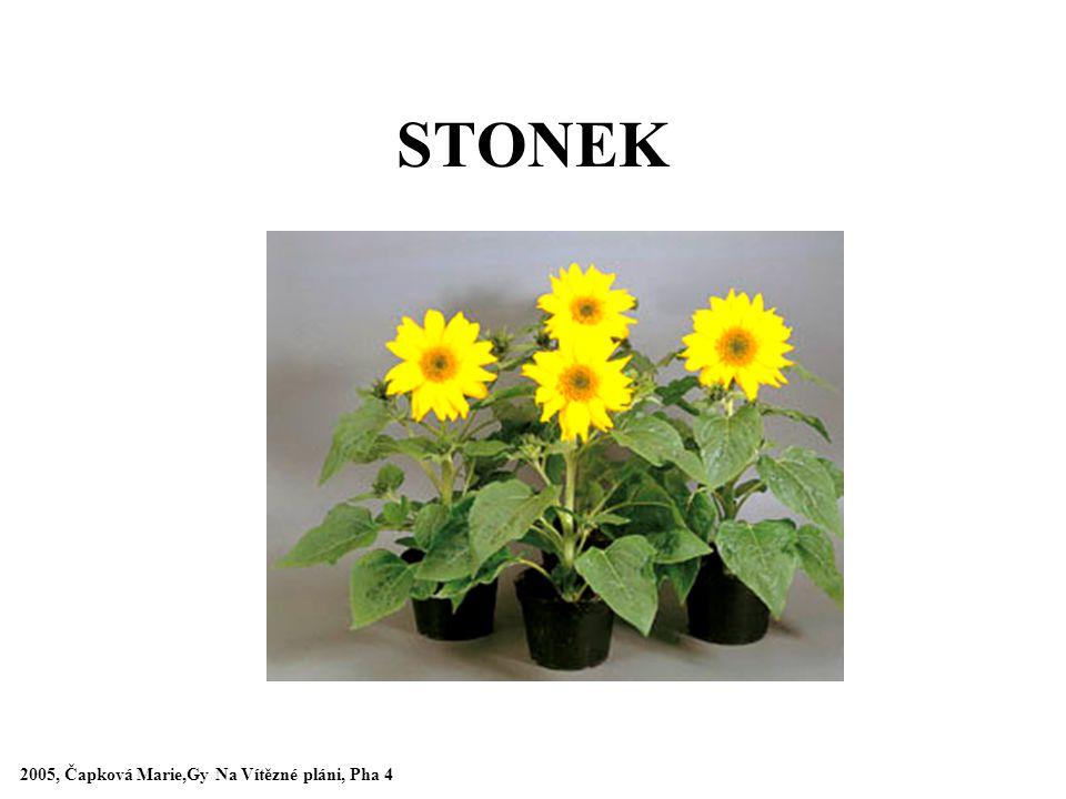 STONEK 2005, Čapková Marie,Gy Na Vítězné pláni, Pha 4