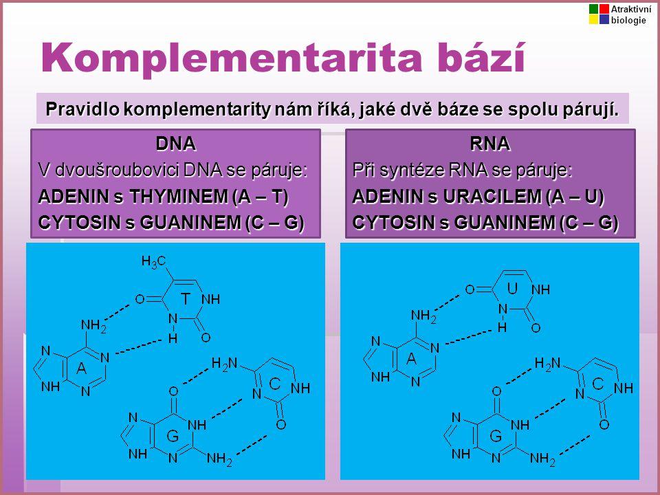 Komplementarita bází Pravidlo komplementarity nám říká, jaké dvě báze se spolu párují. DNA V dvoušroubovici DNA se páruje: ADENIN s THYMINEM (A – T) C