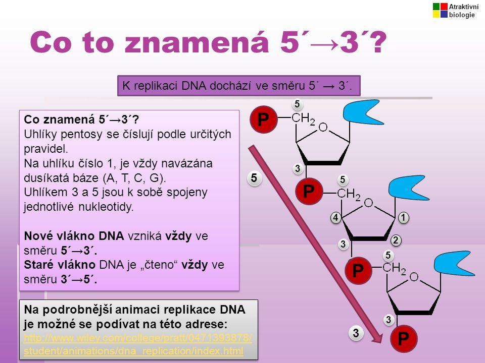 Co to znamená 5´→3´? K replikaci DNA dochází ve směru 5´ → 3´. Co znamená 5´→3´? Uhlíky pentosy se číslují podle určitých pravidel. Na uhlíku číslo 1,