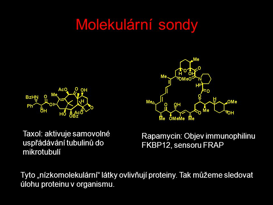 """Molekulární sondy Taxol: aktivuje samovolné uspřádávání tubulinů do mikrotubulí Rapamycin: Objev immunophilinu FKBP12, sensoru FRAP Tyto """"nízkomolekulární látky ovlivňují proteiny."""