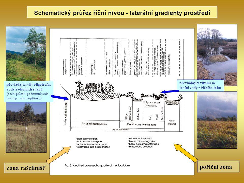 zóna rašelinišť poříční zóna Schematický průřez říční nivou - laterální gradienty prostředí převládající vliv oligotrofní vody z okolních svahů (boční