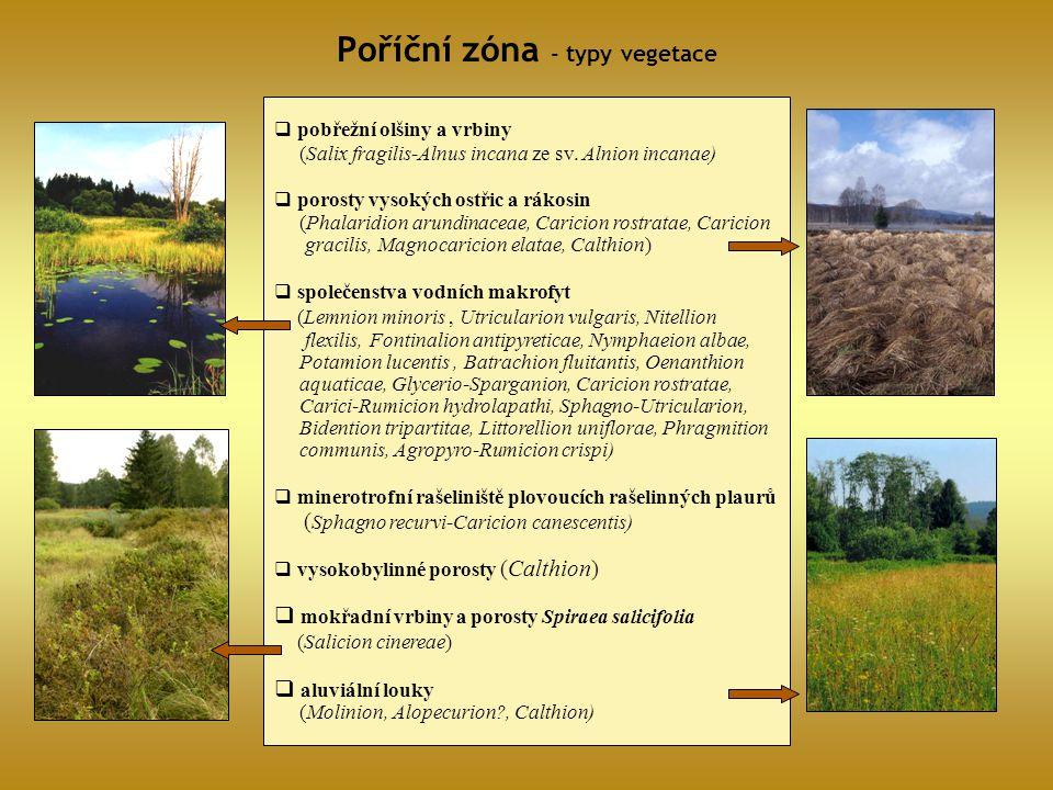 Poříční zóna - typy vegetace  pobřežní olšiny a vrbiny (Salix fragilis-Alnus incana ze sv. Alnion incanae)  porosty vysokých ostřic a rákosin (Phala