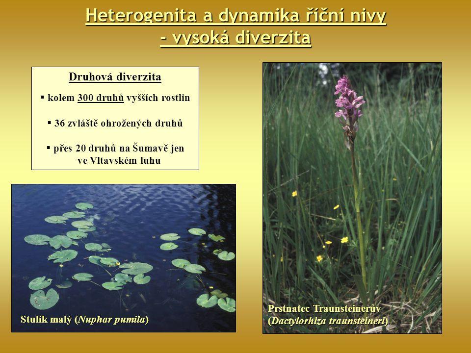Heterogenita a dynamika říční nivy - vysoká diverzita Druhová diverzita  kolem 300 druhů vyšších rostlin  36 zvláště ohrožených druhů  přes 20 druh