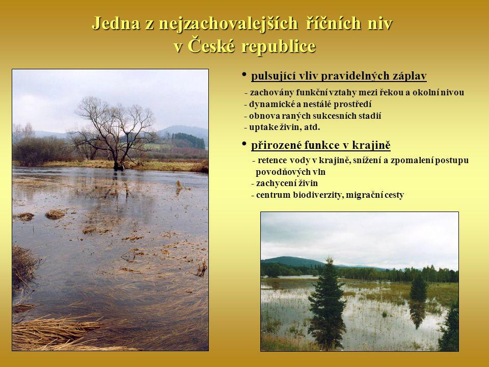 Jedna z nejzachovalejších říčních niv v České republice pulsující vliv pravidelných záplav - zachovány funkční vztahy mezi řekou a okolní nivou - dyna