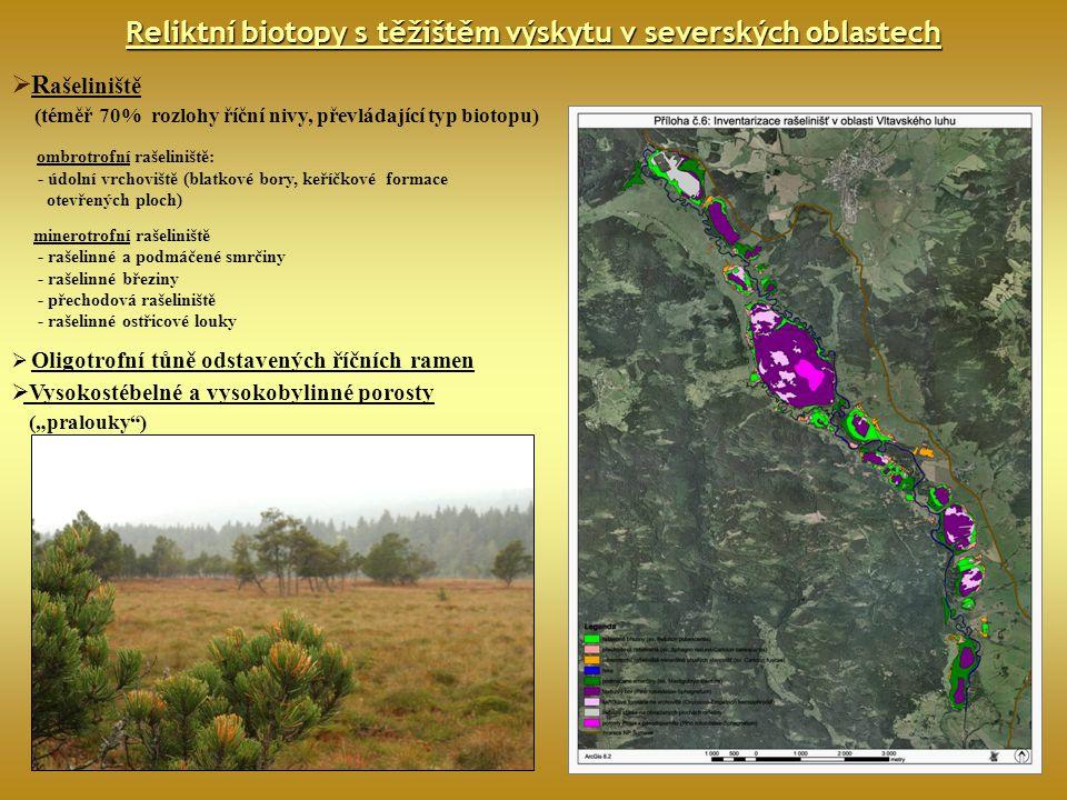 Reliktní biotopy s těžištěm výskytu v severských oblastech  R ašeliniště (téměř 70% rozlohy říční nivy, převládající typ biotopu) ombrotrofní rašelin