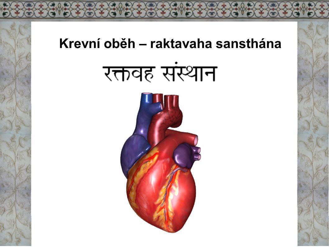 Krevní oběh – raktavaha sansthána