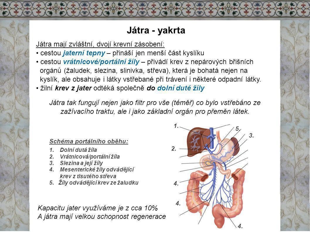 Játra - yakrta Játra mají zvláštní, dvojí krevní zásobení: cestou jaterní tepny – přináší jen menší část kyslíku cestou vrátnicové/portální žíly – při