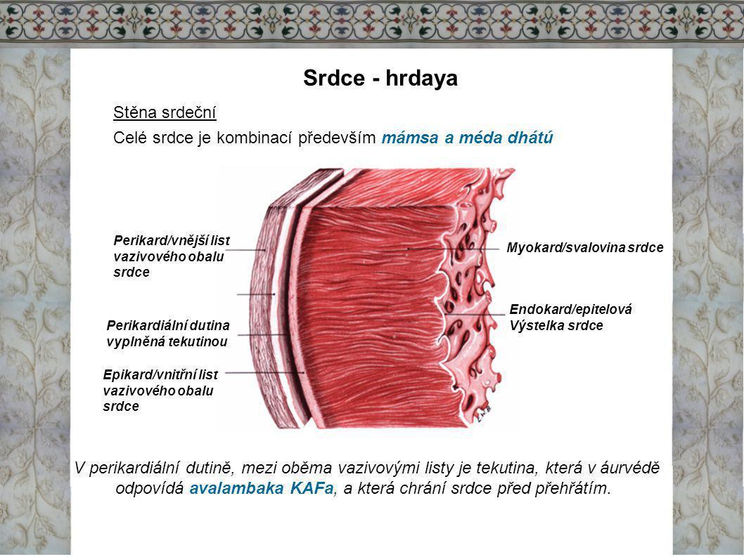 Srdce - hrdaya Stěna srdeční Celé srdce je kombinací především mámsa a méda dhátú Endokard/epitelová Výstelka srdce Myokard/svalovina srdce Perikard/v