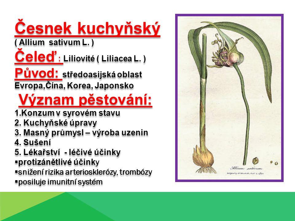 Česnek kuchyňský ( Allium sativum L.) Čeleď : Liliovité ( Liliacea L.
