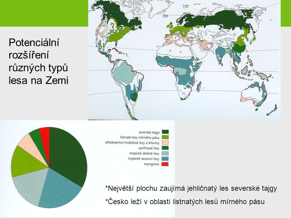 *Největší plochu zaujímá jehličnatý les severské tajgy *Česko leží v oblasti listnatých lesů mírného pásu Potenciální rozšíření různých typů lesa na Z