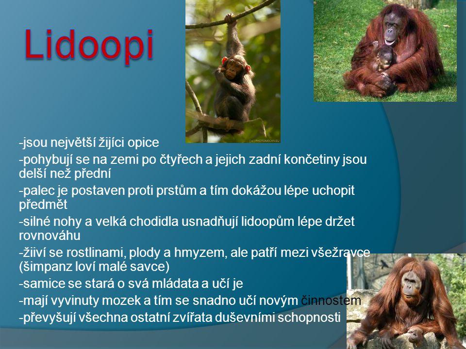 """- - ještě u primátu určujeme nadčeleď - - Hominidé (Hominidae) je čeleď primátů z nadčeledi hominoidi (Hominoidea), někdy se uvádí český název čeledi Hominidae jako """"lidem podobní Je třeba ještě odlišovat: - Hominoidi (Hominoidea) – skupina spojující gibony a hominidy."""