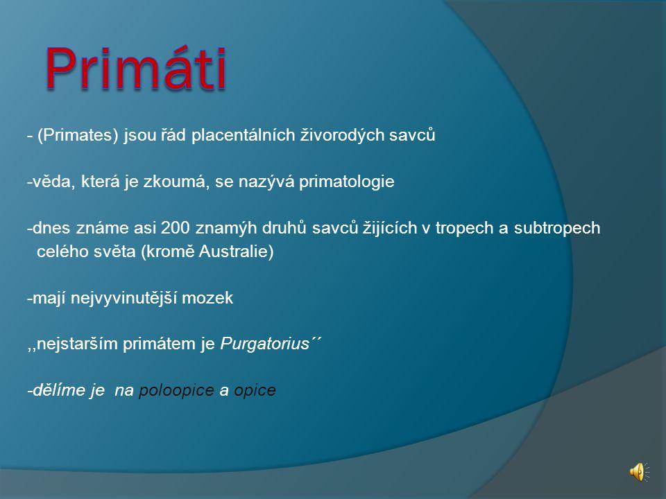 Primáti