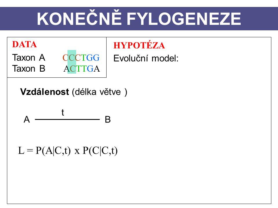 DATA Taxon A CCCTGG Taxon B ACTTGA HYPOTÉZA Evoluční model: Vzdálenost (délka větve ) A B t KONEČNĚ FYLOGENEZE L = P(A|C,t) x P(C|C,t)