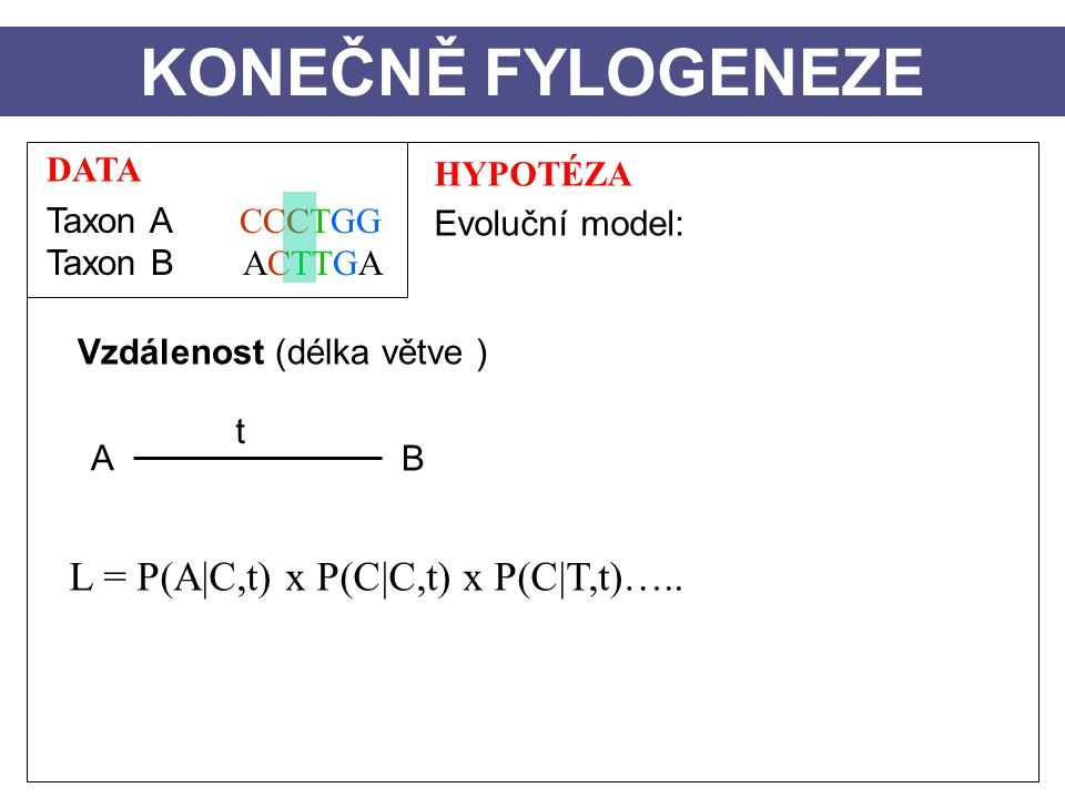 DATA Taxon A CCCTGG Taxon B ACTTGA HYPOTÉZA Evoluční model: Vzdálenost (délka větve ) A B t KONEČNĚ FYLOGENEZE L = P(A|C,t) x P(C|C,t) x P(C|T,t)…..