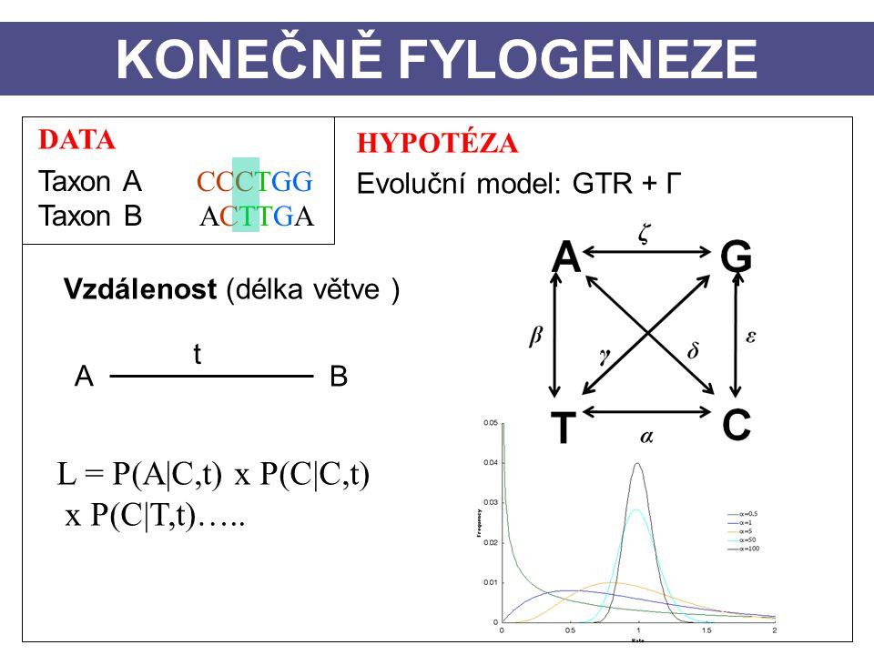 DATA Taxon A CCCTGG Taxon B ACTTGA HYPOTÉZA Evoluční model: GTR + Γ Vzdálenost (délka větve ) A B t KONEČNĚ FYLOGENEZE L = P(A|C,t) x P(C|C,t) x P(C|T