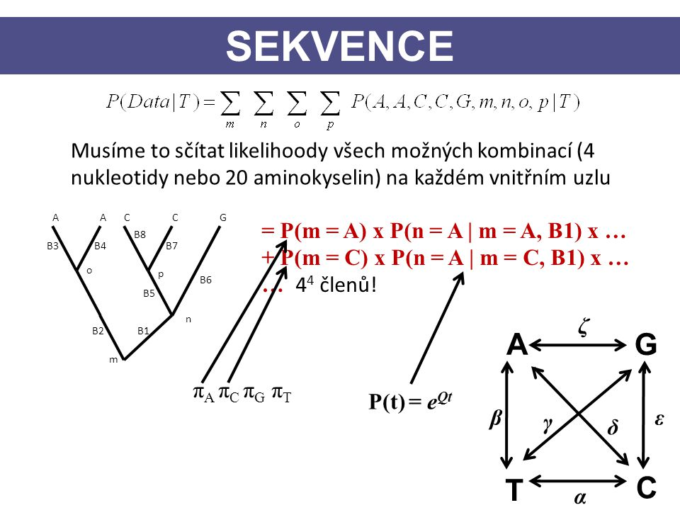 Musíme to sčítat likelihoody všech možných kombinací (4 nukleotidy nebo 20 aminokyselin) na každém vnitřním uzlu AACCG p n o m = P(m = A) x P(n = A |