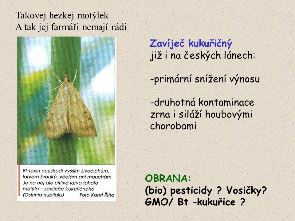 Takovej hezkej motýlek A tak jej farmáři nemají rádi Zavíječ kukuřičný již i na českých lánech: -primární snížení výnosu -druhotná kontaminace zrna i siláží houbovými chorobami OBRANA: (bio) pesticidy .