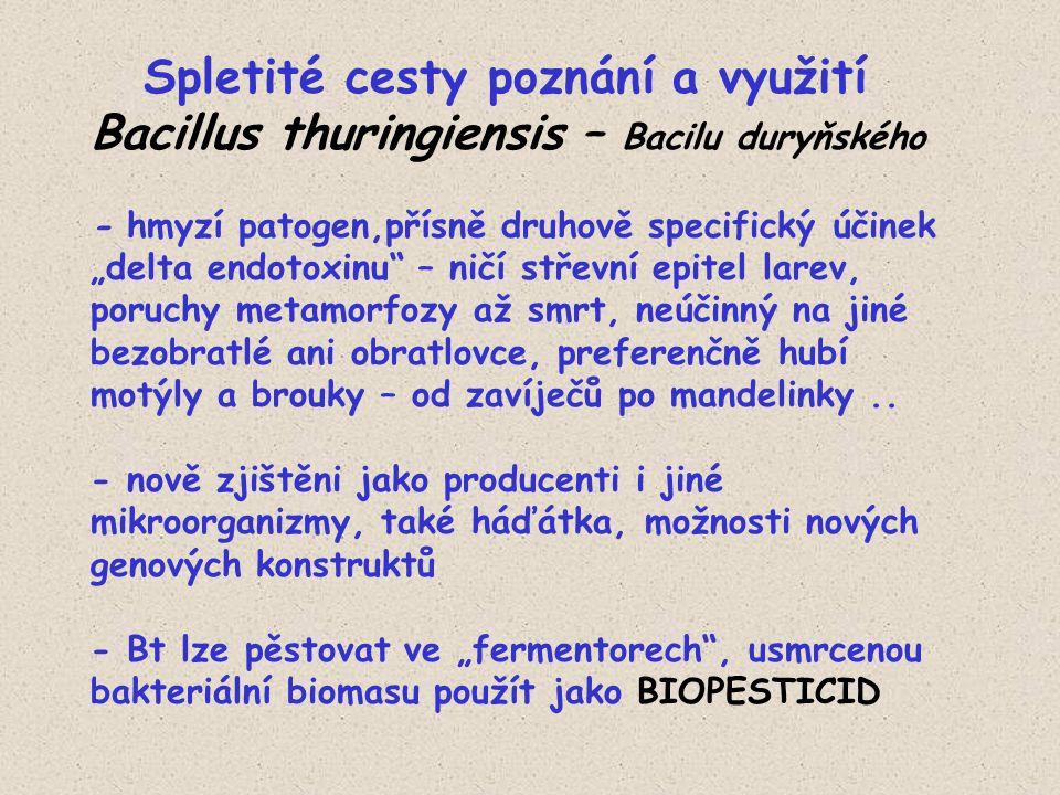 """Spletité cesty poznání a využití Bacillus thuringiensis – Bacilu duryňského - hmyzí patogen,přísně druhově specifický účinek """"delta endotoxinu – ničí střevní epitel larev, poruchy metamorfozy až smrt, neúčinný na jiné bezobratlé ani obratlovce, preferenčně hubí motýly a brouky – od zavíječů po mandelinky.."""