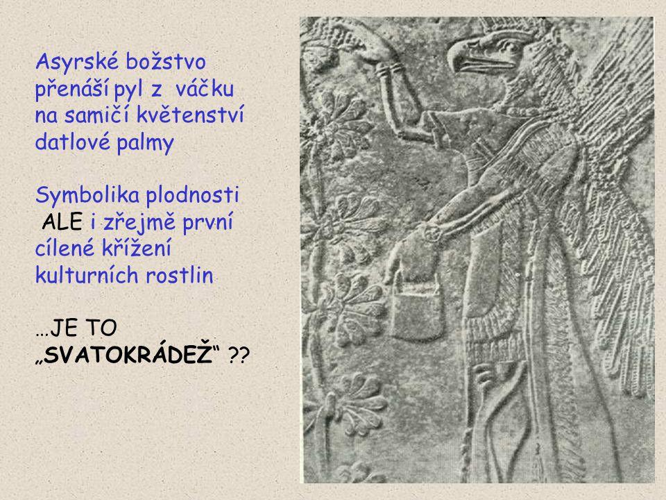 Asyrské božstvo přenáší pyl z váčku na samičí květenství datlové palmy Symbolika plodnosti ALE i zřejmě první cílené křížení kulturních rostlin …JE TO